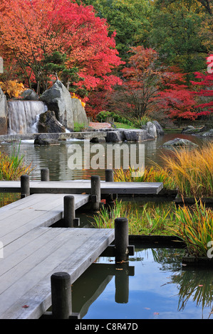 Wooden gangway and waterfall in Japanese garden with tree foliage in red autumn colours in the city Hasselt, Belgium - Stock Photo