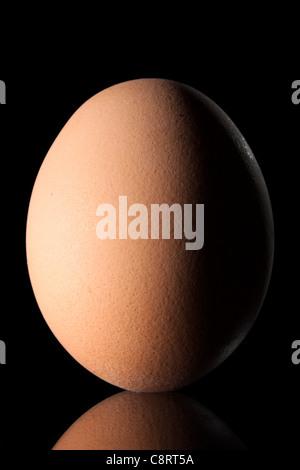 Egg on Black Background - Stock Photo