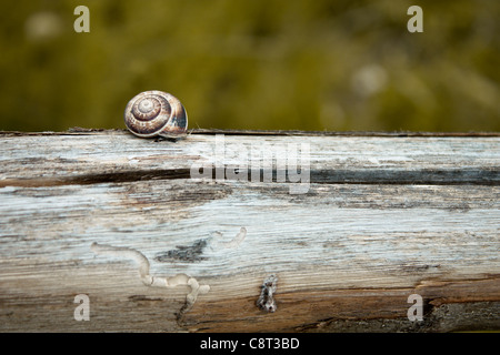 Snail on Wooden Fence - Stock Photo