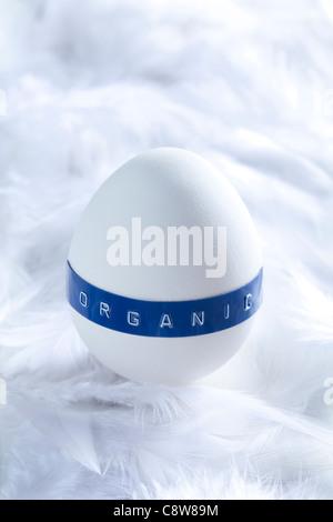 Organic Egg On White Feather - Stock Photo