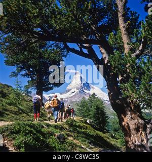Hikers on trail with Arolla pine trees and Matterhorn Zermatt Valais Switzerland Europe - Stock Photo