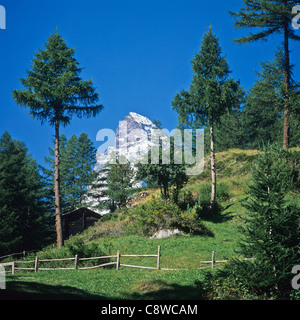 Meadow with larch trees and Matterhorn near Zermatt Valais Switzerland - Stock Photo