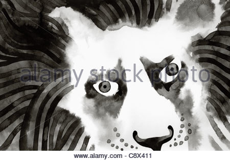 Close up of lion's face - Stock Photo