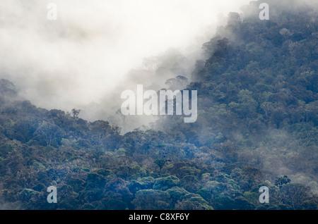 Montane Rainforest around Mt Hagen in Western Highlands of Papua New Guinea - Stock Photo