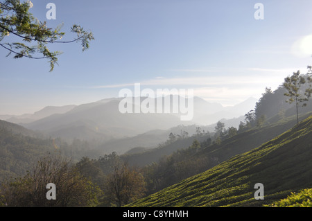 Early morning mist in Munnar makes for beautiful scenery - Stock Photo