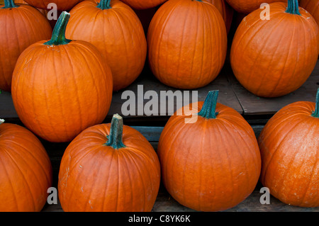 Pumpkins Jean Talon Market Montreal Quebec - Stock Photo