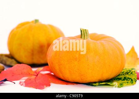 Cucurbita. Mini pumpkins on Autumn leaves. - Stock Photo