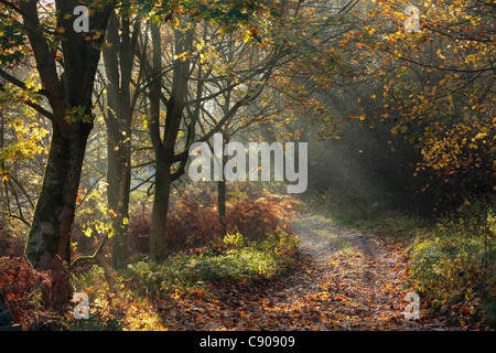 Rays of sunlight shine through autumn leaves onto a trail near Barden in Wharfedale, Yorkshire - Stock Photo