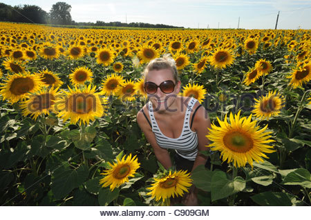 Pretty girl among the sunflowers in France Europe - Stock Photo