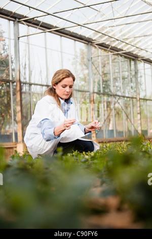 Woman inspecting plants in nursery - Stock Photo