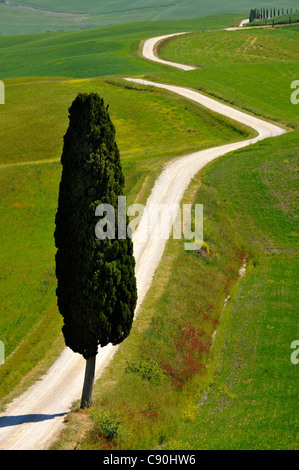 Remote country road with cypresses, Crete, Tuscany, Italy, Europe - Stock Photo