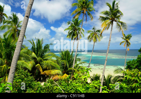 Tropical palm trees on Paniki Island, Raja Ampat islands near West Papua, Indonesia in the coral triangle, Pacific - Stock Photo