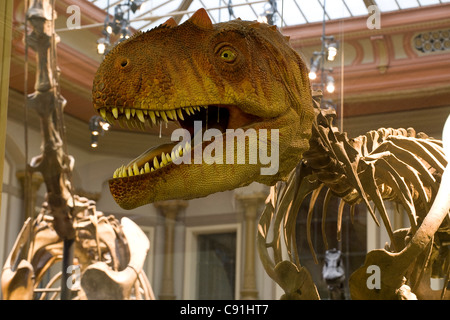 Skeletons of dinosaurs at Berlin Museum of Natural History, Invalidenstrasse, Berlin-Mitte, Berlin, Germany, Europe - Stock Photo