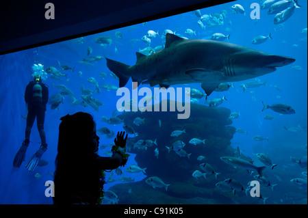 Girl looking at shark, Palma Aquarium, Mallorca, Balearics, Spain - Stock Photo