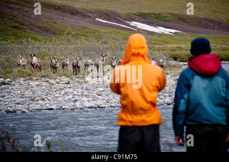 Hikers watch caribou along the Hulahula River, ANWR, Brooks Range, Summer in Arctic Alaska - Stock Photo