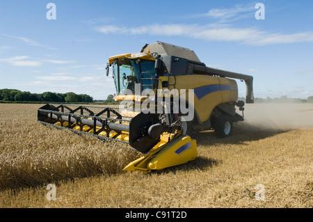 Thresher harvesting wheat - Stock Photo