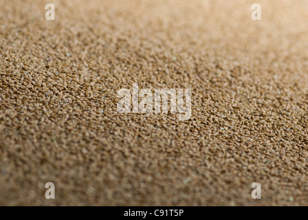 Close up of wheat grains - Stock Photo