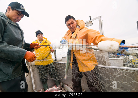 Native family hauls in their set net while commercial fishing for sockeye salmon in Bristol Bay, Southwest AK, Summer - Stock Photo
