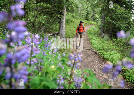 Woman hikes through Nootka lupine during a backpacking trip on Resurrection Pass Trail in the Chugach National Forest, - Stock Photo