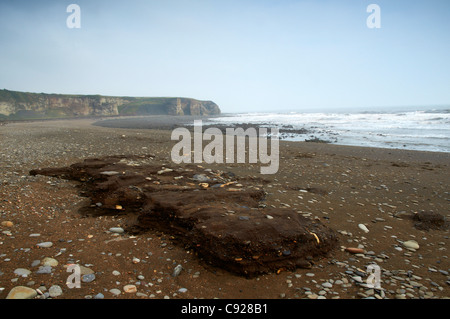 Blast Beach at Dawdon looking to Nose's Point on Durham Heritage Coast. The remnants of the mining industry's effect - Stock Photo