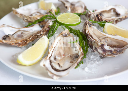 Close up of oysters on half shell - Stock Photo