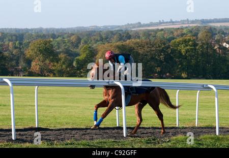 race horse training, newmarket, suffolk, england - Stock Photo