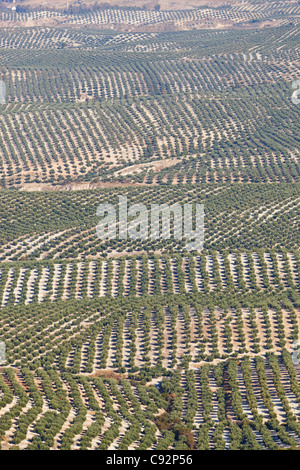 Olive groves near Mancha Real, Jaen Province, Spain. - Stock Photo
