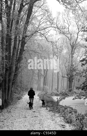 UK, Wiltshire. A young woman walks her dogs through the frozen woods of rural Wiltshire. MR - Stock Photo