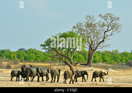 Zimbabwe is a small country boasting an incredible variety of landscapes and animals. - Stock Photo