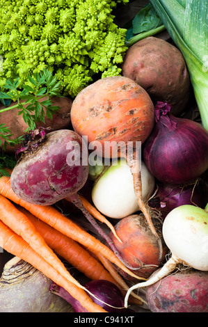 Mixed vegetables: turnips, carrots, swede, potatoes, beetroots, red onions, leek and Roman cauliflower - Stock Photo