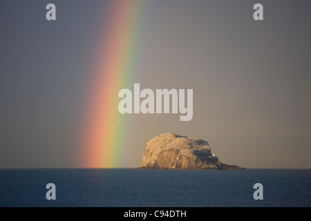 Rain falls around Bass Rock in the evening sun producing a stunning rainbow to the west of it. Taken from North - Stock Photo