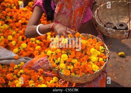 India, West Bengal, Kolkata, Mullik Ghat, flower market female vendor selling marigolds by the basketfull - Stock Photo