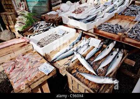 Fresh fish in Balloro market in Palermo, Sicily, Italy. - Stock Photo