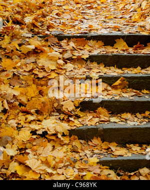 Stone Stairs Covered With Orange Autumn Leaves - Stock Photo