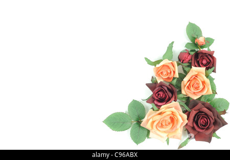 Batch of colorful roses on a white background - Stock Photo