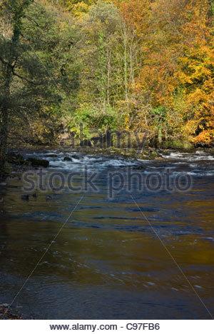 River Wharfe in Strid Woods - Stock Photo