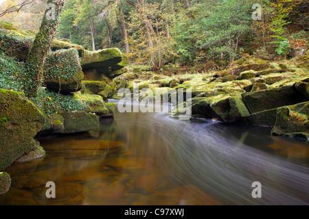 Strid Wood; River Wharfe; Bolton Abbey; Yorkshire; UK - Stock Photo