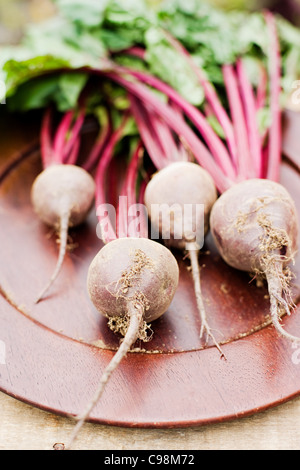Fresh beetroot with stems - Stock Photo