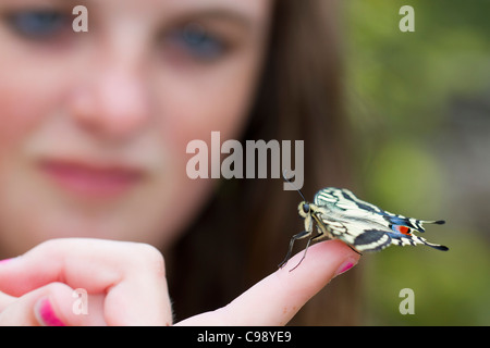 Swallowtail Butterfly; Papilio machaon; on a girl's finger; UK - Stock Photo