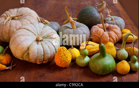 Halloween pumpkin still life on wood table with various species - Stock Photo