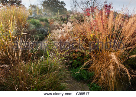 Marchants sussex ornamental grasses and perennials in for Small ornamental grasses for borders
