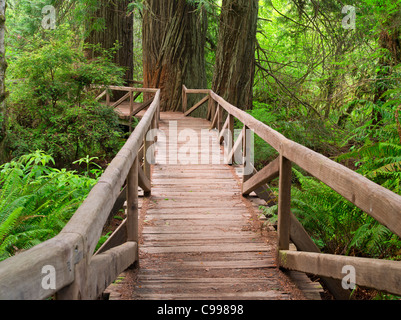 Bridge over creek in Redwood National and State Parks, California - Stock Photo