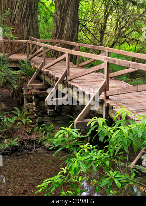 Bridge over creek in Redwood National and State Park, California - Stock Photo