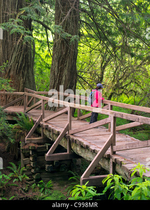 Bridge with hiker over creek in Redwood National and State Parks, California - Stock Photo