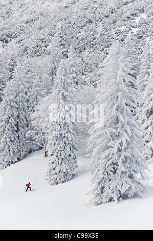 Germany, Bavaria, Young man doing telemark skiing in Herzogstand mountain forest - Stock Photo