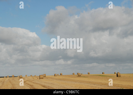 wheat balls on harvested corn field between Amiens and Doullens in autumn in Picardy,  France - Stock Photo