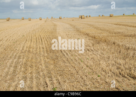 Wheat balls on a corn field after autumn harvest in Picardy, northern France - Stock Photo