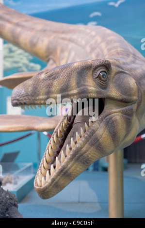 Dinosaur exhibit at the New Mexico Museum of Natural History and Science, Albuquerque, New Mexico. - Stock Photo