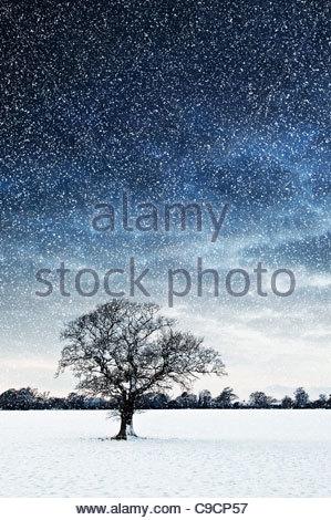 tree in field snowing - Stock Photo