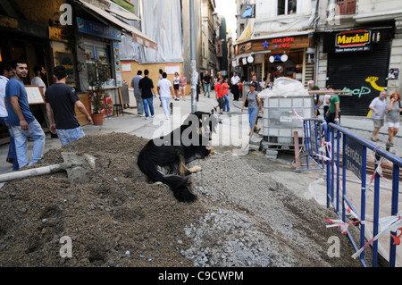 A mongrel dog resting in a pile of cement, in a construction zone in Beyoglu district, Istanbul, Turkey. - Stock Photo